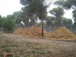 Biomasa 6