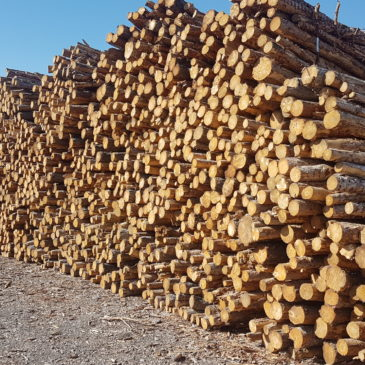 NOVALIS exceeds in 2017 the 400,000 t of forest products marketed
