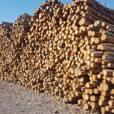 NOVALIS dépasse en 2017 les 400 000 t de produits forestiers commercialisés