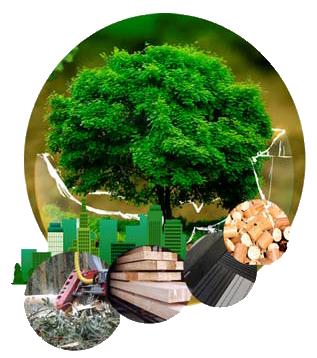 I Congreso Nacional sobre Bioeconomía Forestal