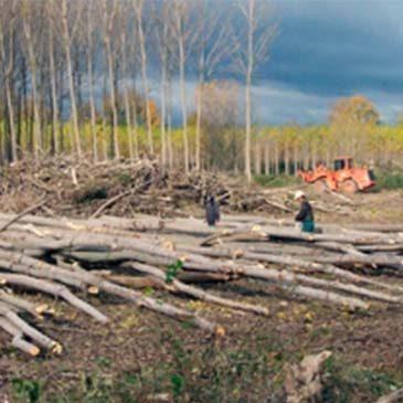 España apenas utiliza el 35% de los 50 millones de metros cúbicos de biomasa que generan sus bosques cada año.